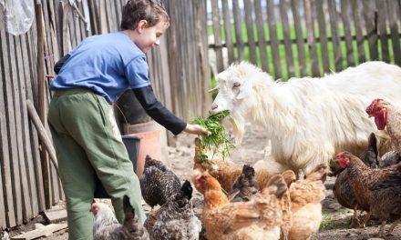 À Vrai Dire – Pour une éthique de l'élevage